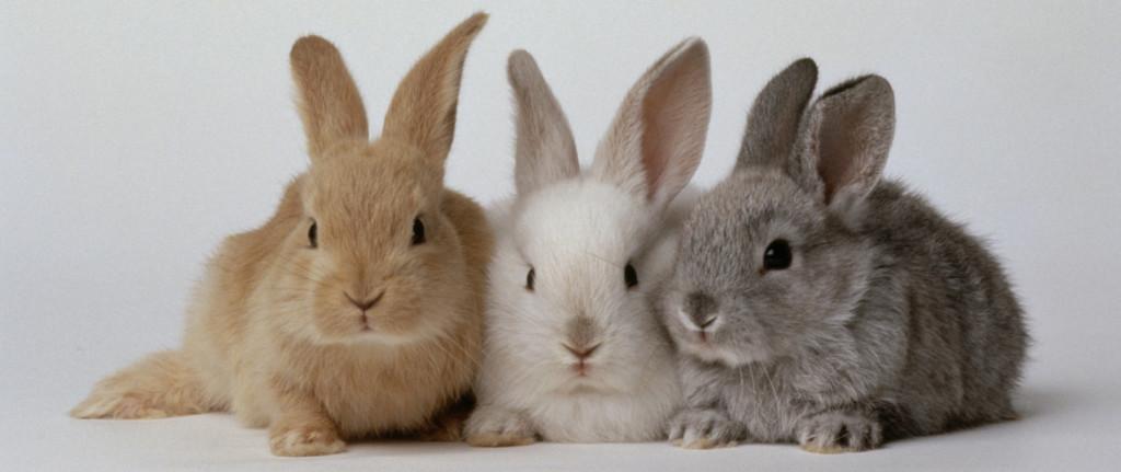 bunniess